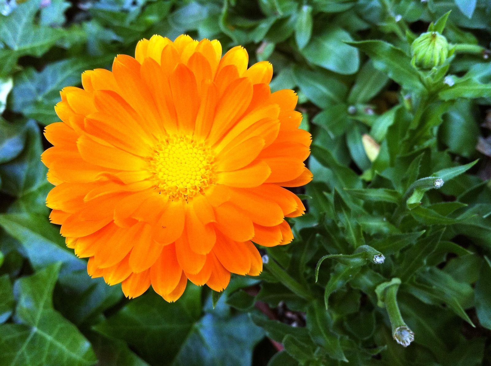 Orangef_2